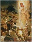 angel shepherds