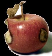 rottenapple